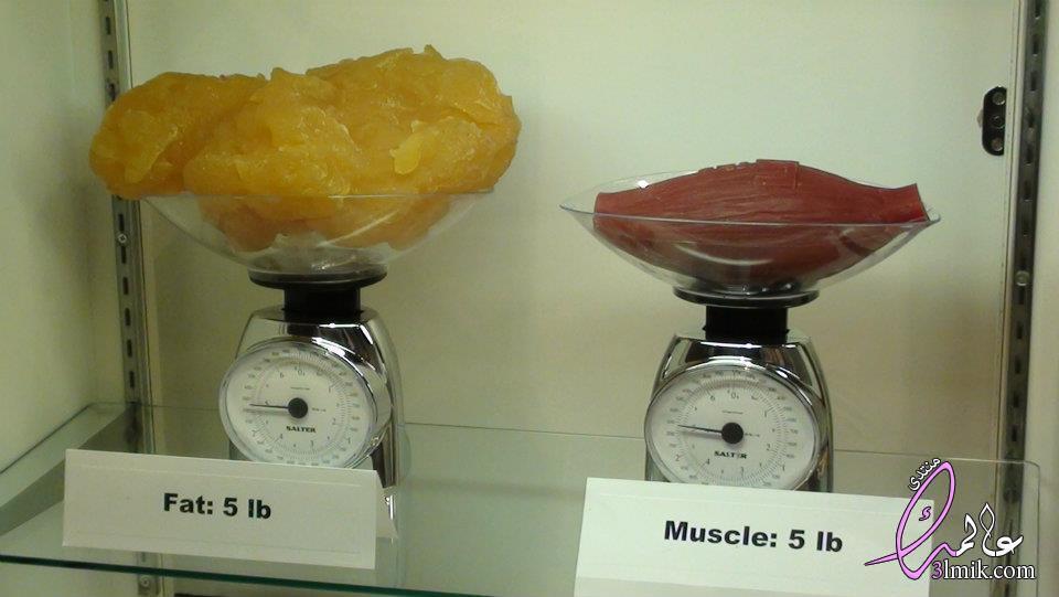 كيف انزل نسبة الدهون,نسبة الدهون المثالية في الجسم,برنامج حساب كتلة الجسم,جهاز قياس نسبة الدهون