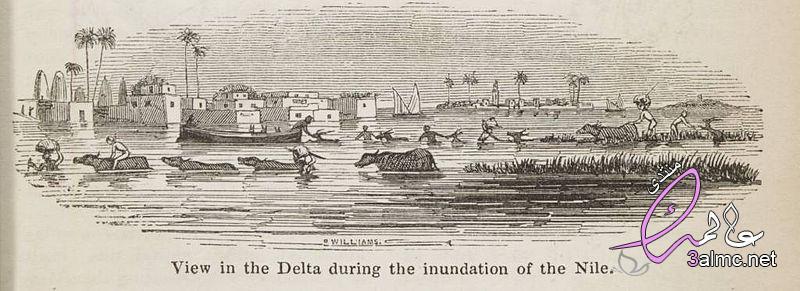 أهم الزرعات في دلتا النيل,دلتا النيل,دلتا النيل المصرية,الحيوانات والنباتات