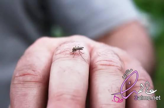 لماذا يهاجم البعوض بعض الأشخاص دون غيرهم؟ اختيار البعوض الأشخاص 2020