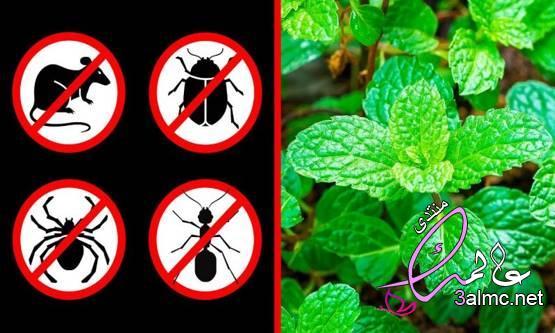 طرق منزلية تساعد على التخلص من النمل التخلص من النمل بالخل التخلص من النمل بالقرفة 2020