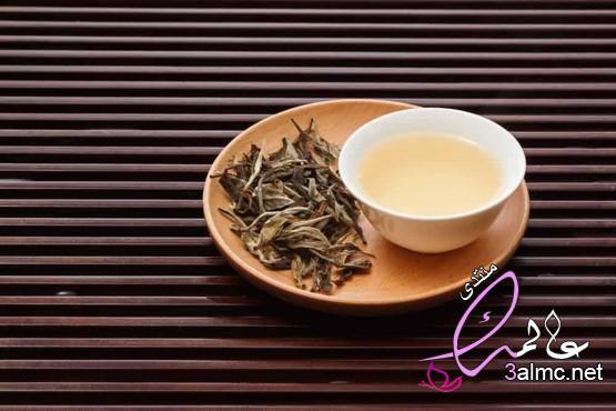 هل سمعت عن الشاي الأبيض؟،8 فوائد وفيرة من الشاي الأبيض لصحة جسمك،فوائد الشاي الأبيض للصحة