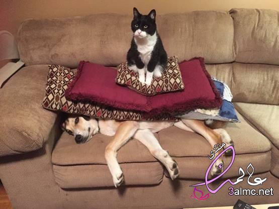 صور مربكة.. عندما تلجأ القطط إلى الفوضى