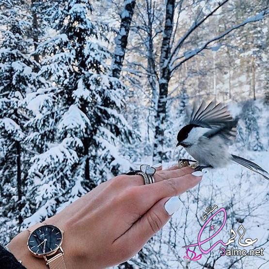 سحر الطبيعة فى الشتاء،صور مناظر طبيعية للشتاء 2020 جميلة،مناظر طبيعية، مناظر طبيعية جميلة خلفيات