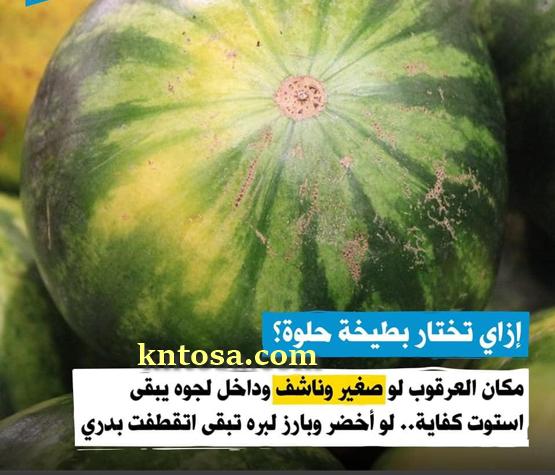 بالصور كيف تعرف البطيخ الناضج بنفسك حتي لا يخدعك،إزاى تعرف البطيخة حمرا ولا قرعة بدون معلم 3almik.com_06_20_159