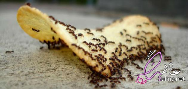 طرق طبيعية للتخلص من النمل فى المنزل2020,كيفية التخلص من النمل في البيت