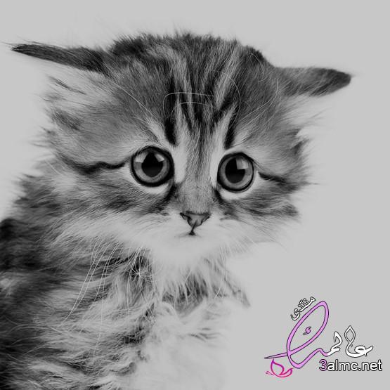 لمحبي القطط صور اجمل قطط في العالم 2020 صغيرة تجنن،اجمل واروع صور قطط