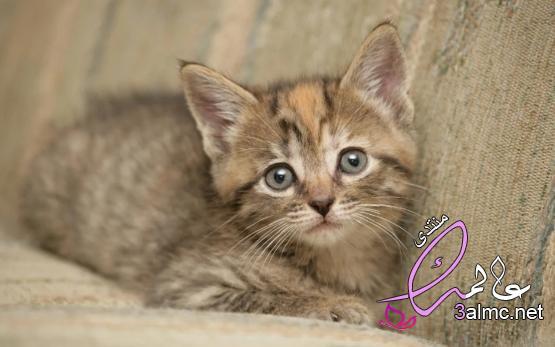اجمل واروع صور قطط صغيرة cute cats ستراها في حياتك !,اجمل قطة في الكون, قطط روعة,قطط جميلة