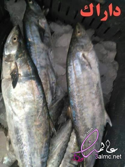 أنواع الأسماك وأسماؤها، انواع الاسماك البحرية فى مصر بالصور، انواع السمك واشكاله،اسماء انواع السمك