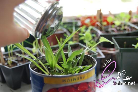 الزراعة المنزلية باسهل الطرق,أسهل طريقة لتعلم الزراعة في المنزل,تعليم الزراعة للمبتدئين