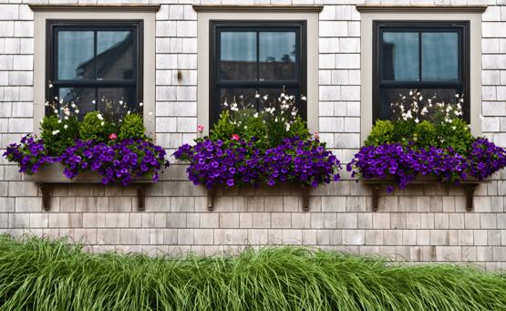 زيني نوافذ منزلك بالزهور