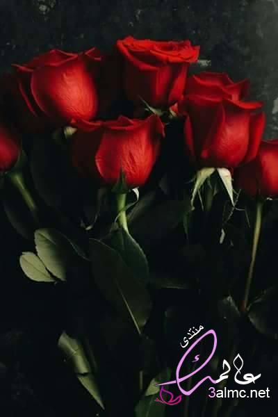 باقات ورد هدايا, اشكال باقات ورد هدايا,Flowersاجمل باقات الورد الطبيعي