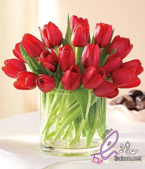 أجمل الصور الطبيعية والرومانسية للورود,زهرة التوليب الحمراء,صور ورد التوليب