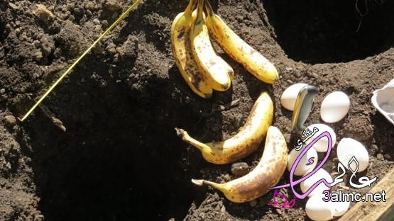 طريقة عمل السماد من مخلفات الحديقة والمطبخ,كيفية عمل الكمبوست النباتى,السماد العضوي الكمبوست
