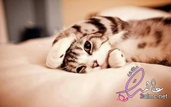 فوائد صحية لوجود القطط فى حياة الانسان