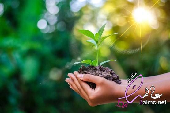 عناصر البيئة.. كيف تشكل حياتنا جميعا؟