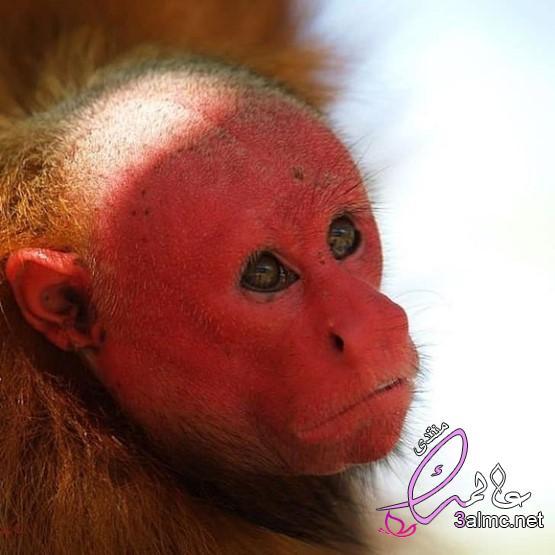 حيوانات نادرة مهددة بالانقراض,حيوانات نادرة جداً، انواع الحيوانات النادرة، حيوانات غريبة ومخيفة